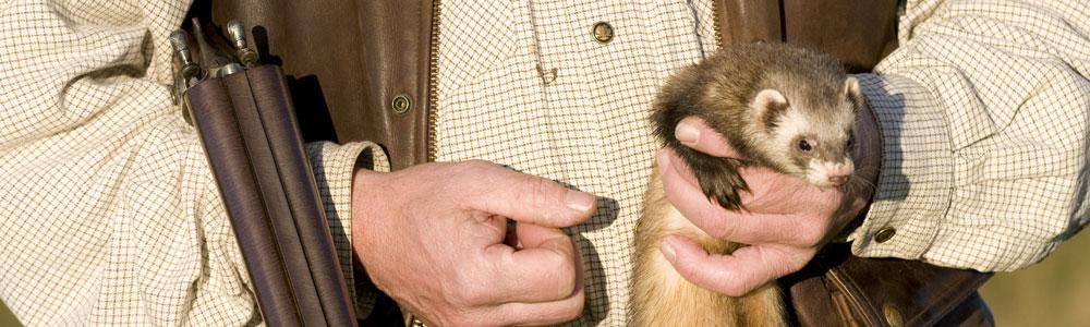 http://ekeskogshunt.com/wp-content/uploads/2010/11/Ekeskogs-Hunting-Gimlet.jpg
