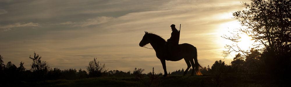 http://ekeskogshunt.com/wp-content/uploads/2010/11/Ekeskogs-Hunting-Peer-Horse.jpg